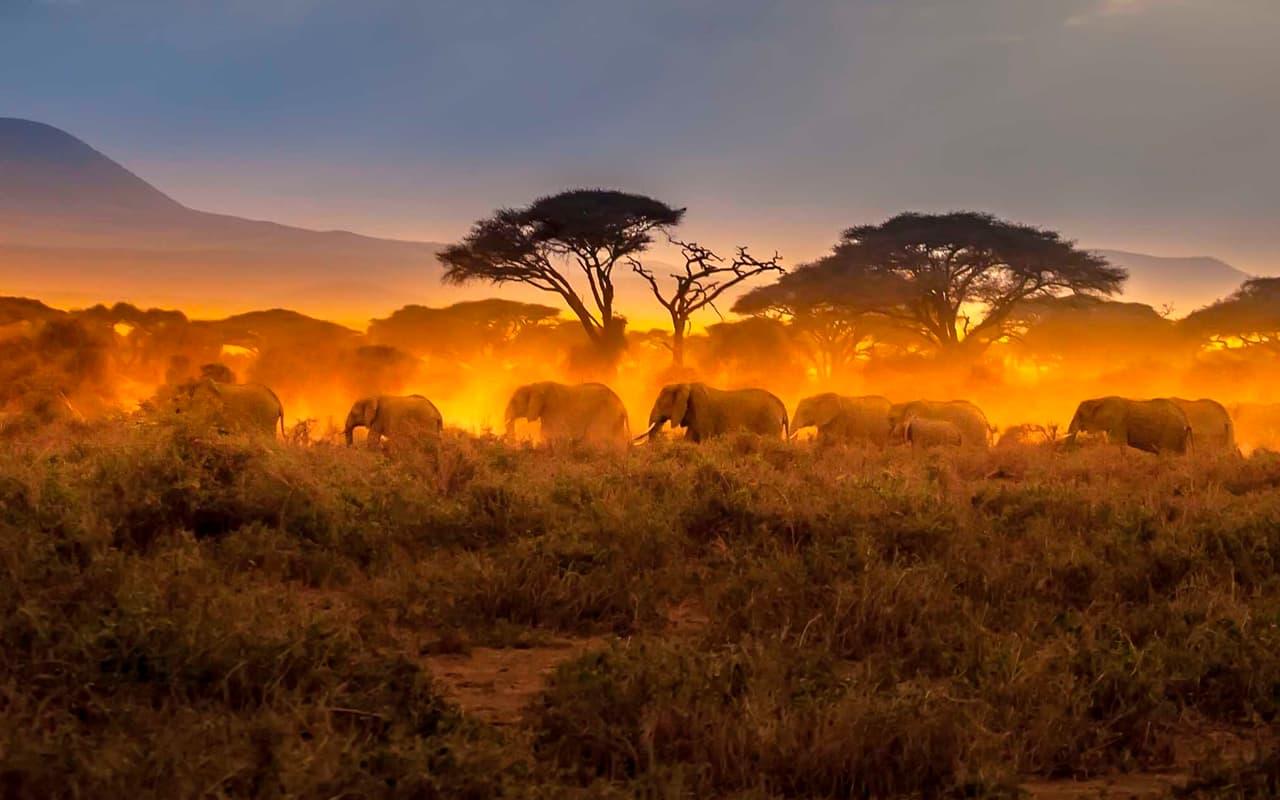 organizar safari Kenia