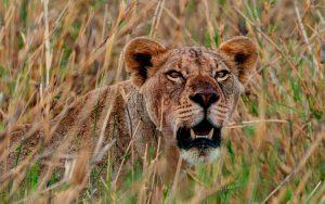 leona kenia