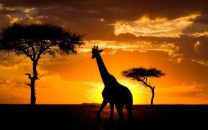 kenia parque nacional