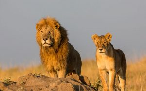 fotografiar kenia