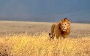 leones kenia