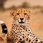 parques kenia