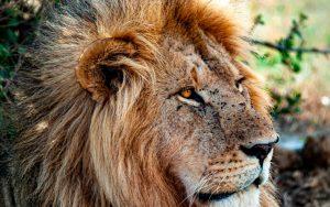 leon kenia