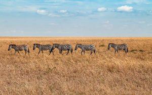 parque kenia